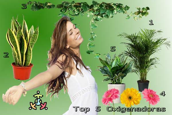 mejores plantas oxigenadoras hogar
