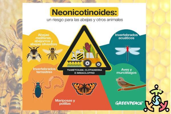 neonicotinoides efectos abejas