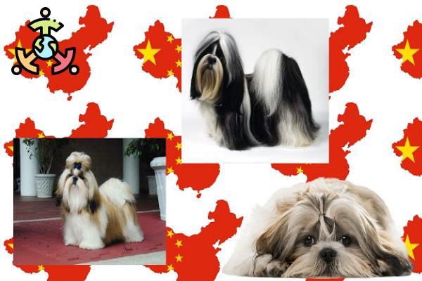 raza china perros pequeñas