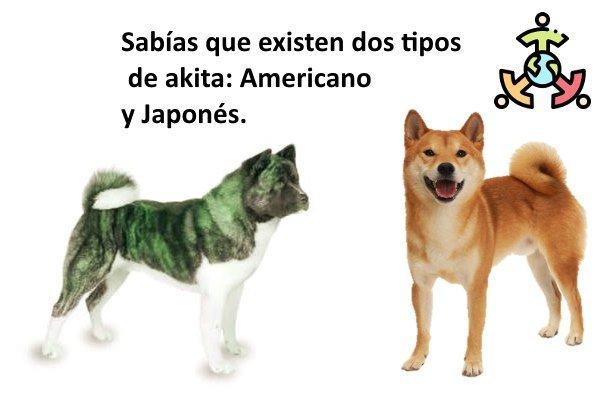 tipos de akita perros