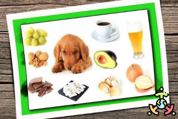 alimentos perjudiciales perro