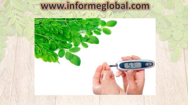 Moringa Oleifeira: Usos, Beneficios y Propiedades