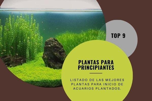 9 Plantas acuarios plantados principiante